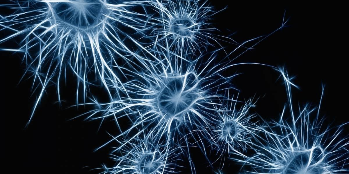 Cerebro: científicos descubren como podrían sanar el estado de coma