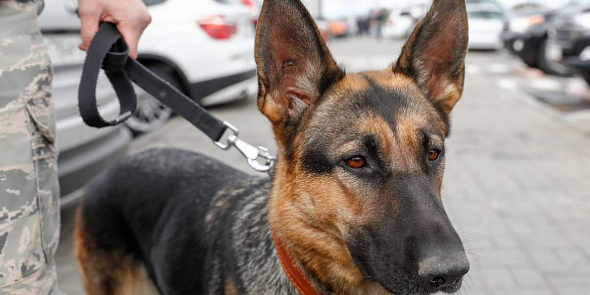 """China sorprende al crear el primer """"súper perro"""" clonado que trabajará con la policía"""