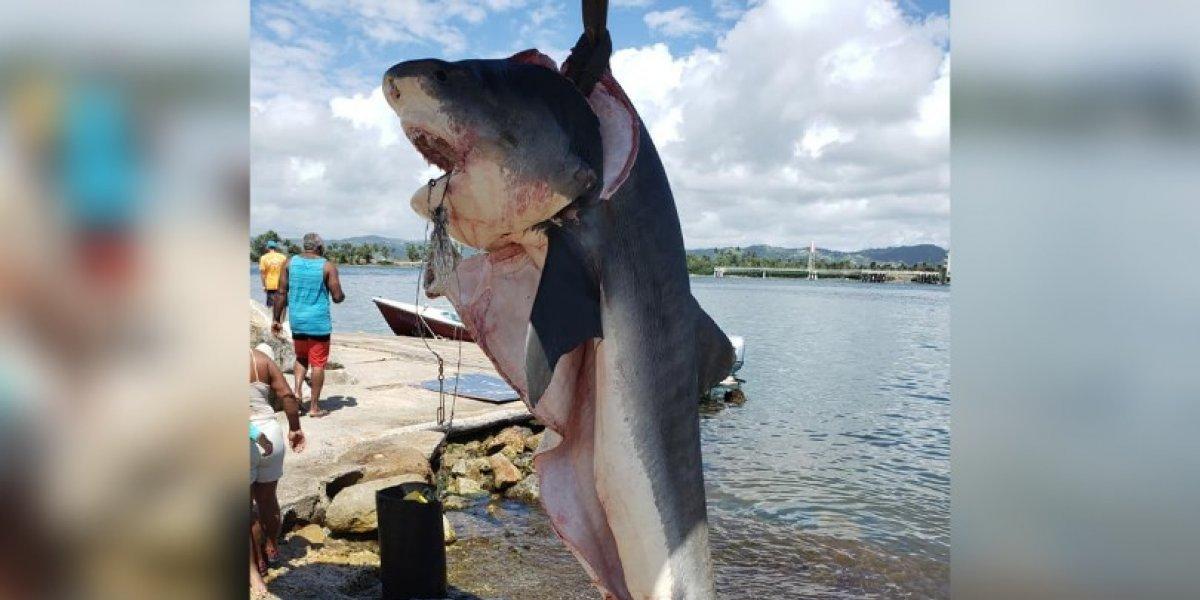 Indignación en redes por pesca de tiburón en Yabucoa