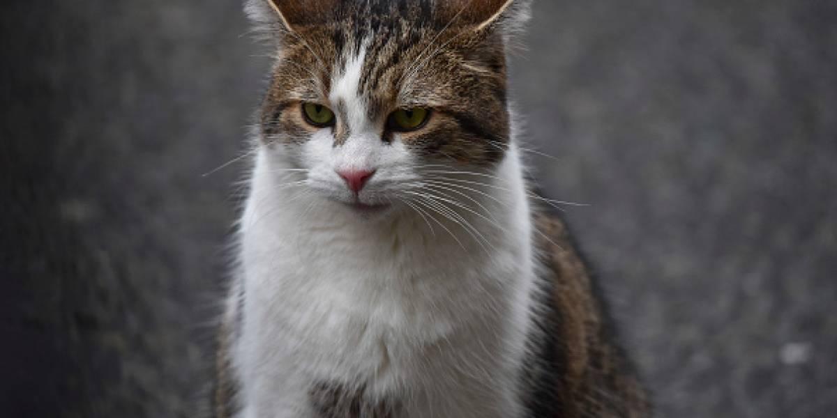 Niño decía que el gato quería matarlo y tenía razón: médicos descubren que sufría trastorno mental por culpa de una bacteria que le contagió el felino
