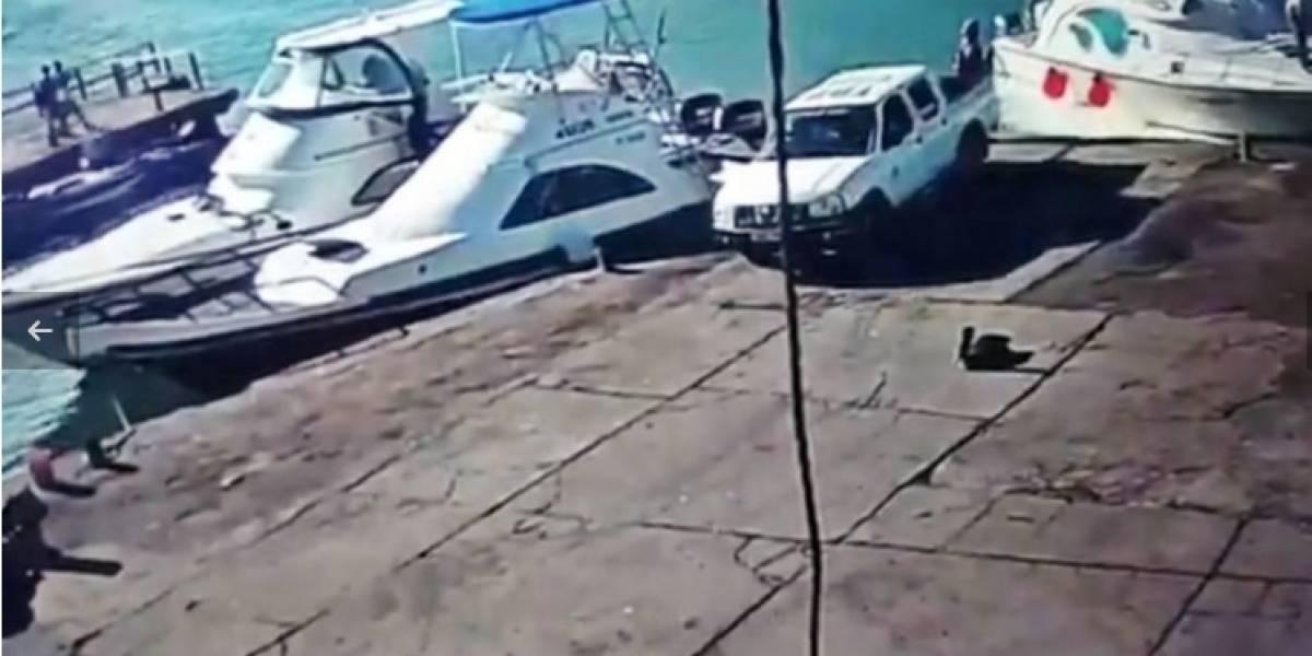 Chofer que atropelló a pelícano en Galápagos debe pagar más de $6 mil y trabajo comunitario