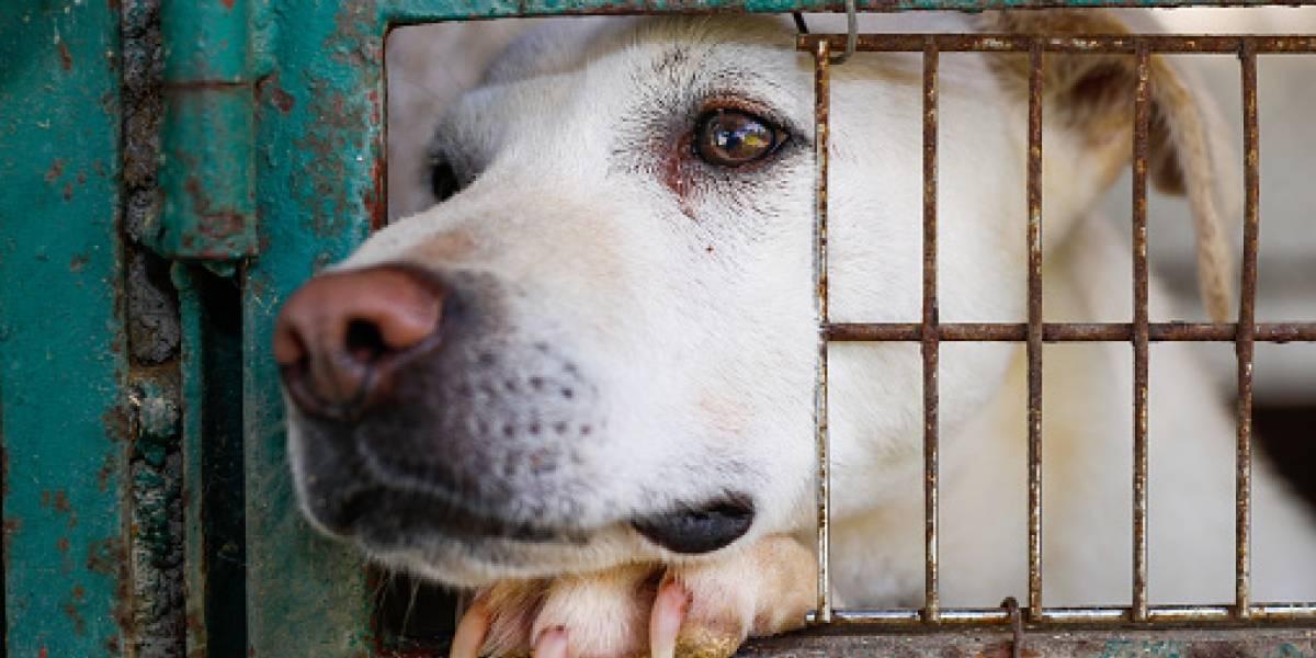 """""""Es el más delgado que he visto en mi vida"""": abandonan a perrito para que se muera de hambre y sobrevive tras comer vidrio por días"""