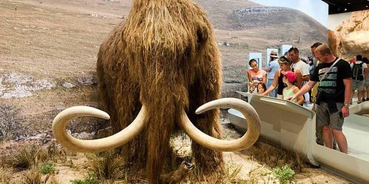 Video: Tras revivir células de hace 28.000 años los científicos están más cerca de clonar un mamut