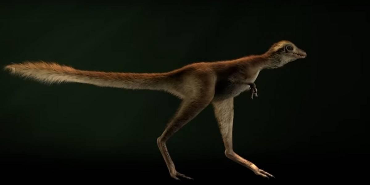 Así es como se veía el adorable bebé T-Rex