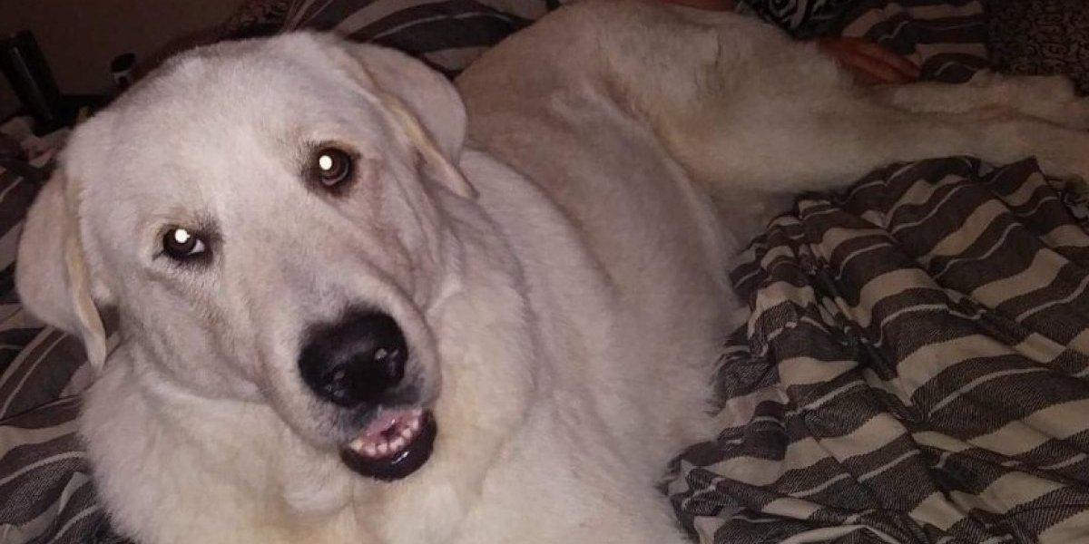 La historia de Zero: familia rescató a perrito de una muerte segura y años después él murió salvando sus vidas en un tiroteo