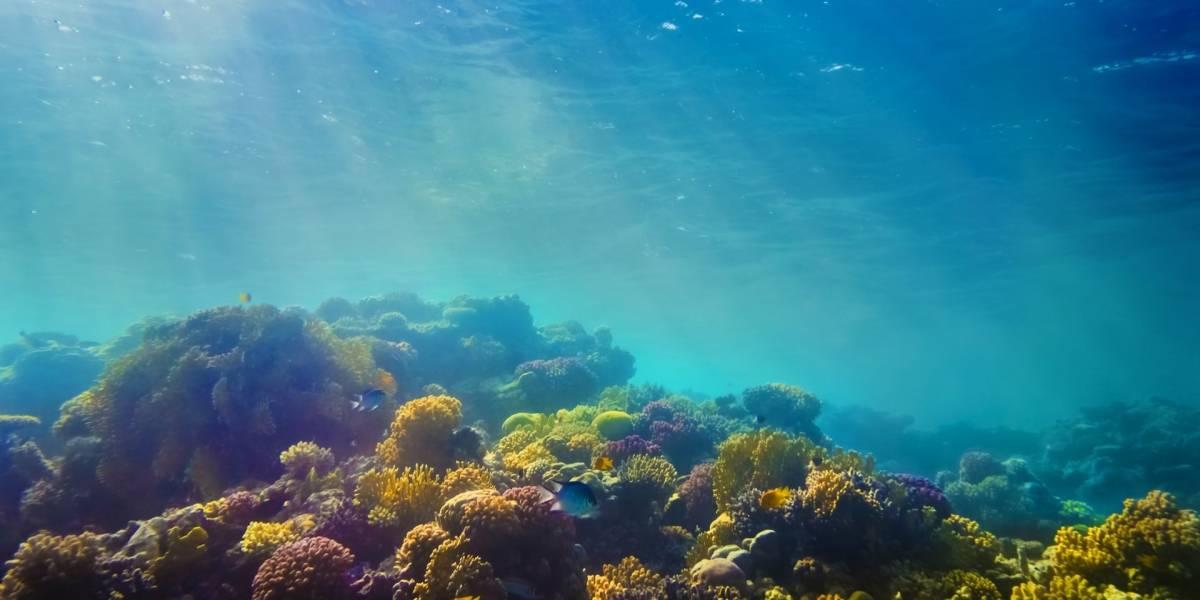 Científicos encuentran microplásticos dentro de criaturas en las partes más profundas del océano