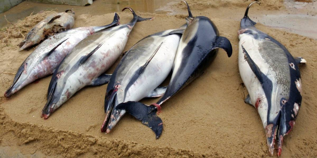 Aparecen 1,100 delfines muertos en costa francesa este año