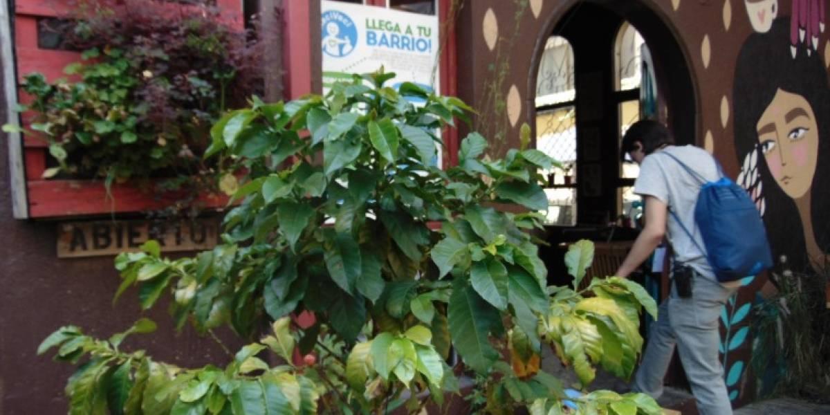 ¡ReFloréstate! Una campaña que busca activar un tradicional barrio de Quito
