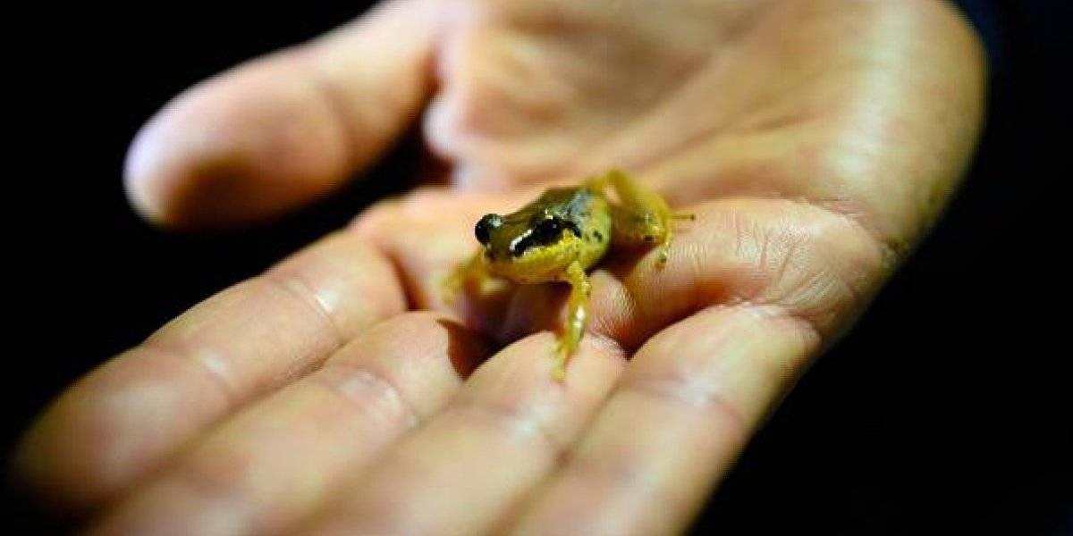 Descubren la especie invasora más destructiva del mundo, podría eliminar especies enteras