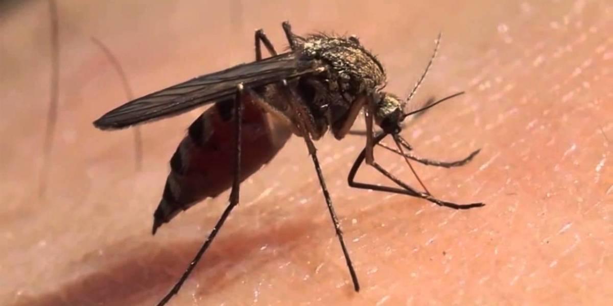 Letal mosquito ahora está presente en dos regiones del país