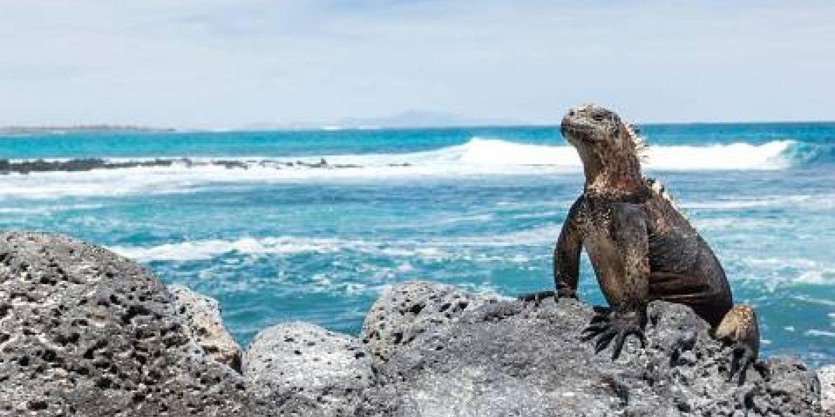 Vuelos internacionales directos a Galápagos dice Ley Humanitaria