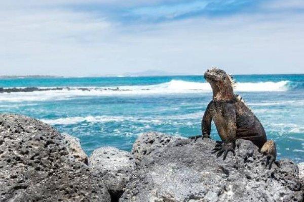 Ecuador y NatGeo crean un fondo para conservar las Galápagos