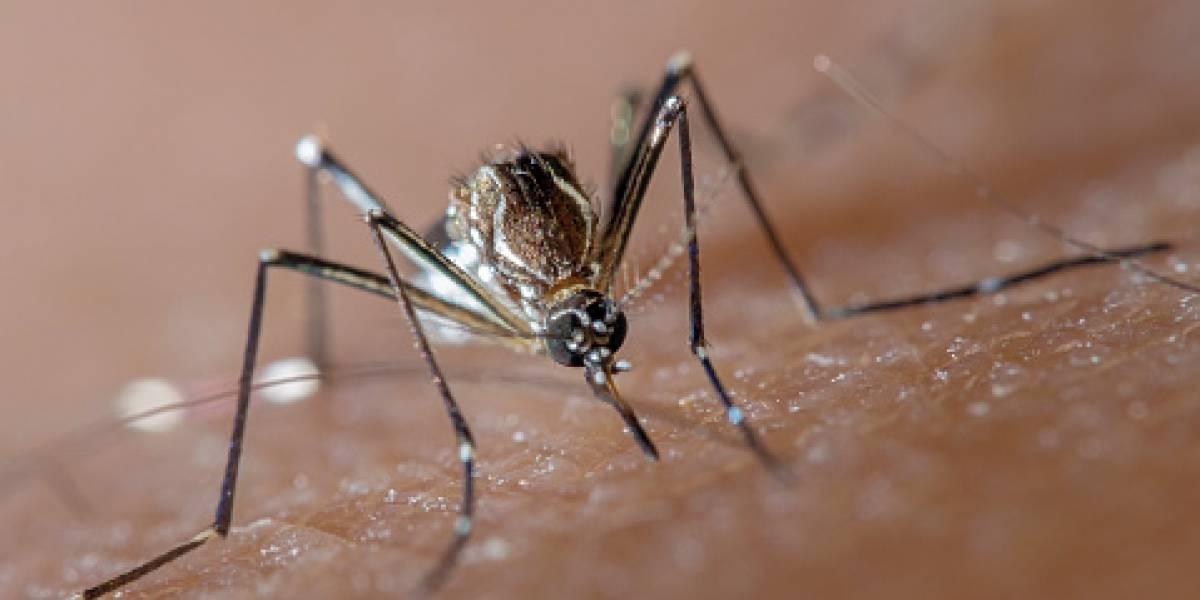 """El hallazgo que revoluciona a la ciencia: descubren cómo hacer a los humanos """"invisibles"""" para los mosquitos"""