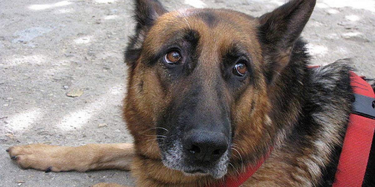 Etafashion se solidariza con fundaciones de rescate animal afectados por alimentos envenenado