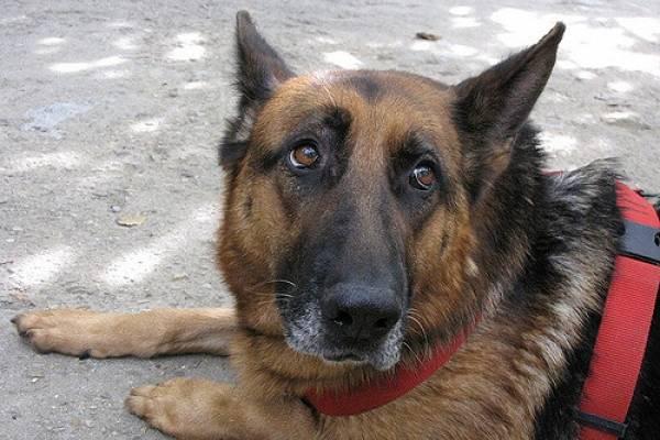 Los perros podrían ser portadores de un nuevo virus mortal para los humanos