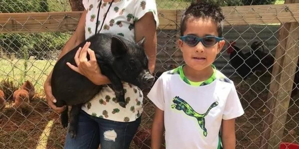Niño regala a su cerdita a santuario en Yabucoa tras robo de animales