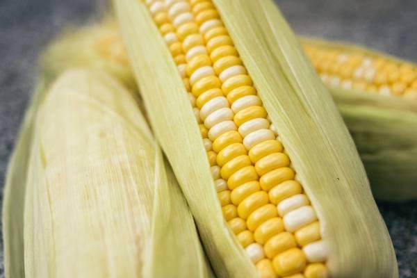 Mejorar la fibromialgia alimentos para