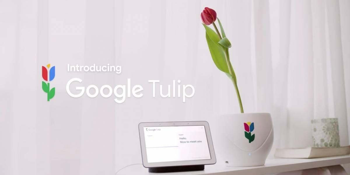 No 1º de abril, Google 'anuncia' recurso que permite conversar com as flores