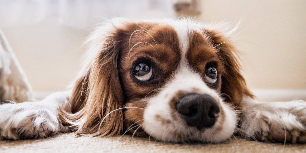 Cientistas alertam: cachorros podem carregar um vírus que pode ser mortal para os humanos