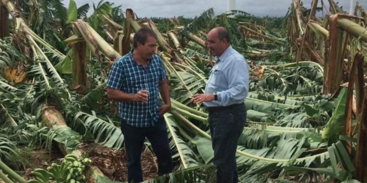 Anuncian apertura del periodo para asegurar producción agrícola durante Temporada de Huracanes