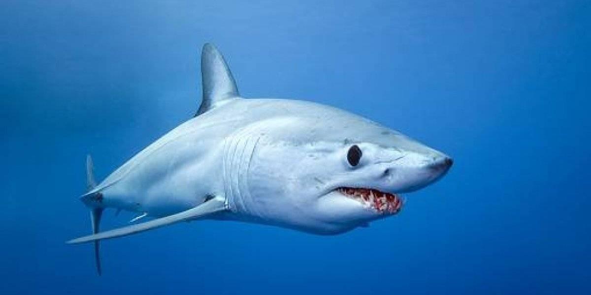 Misteriosa criatura arranca cabeza de tiburón y desata cientos de teorías en Internet