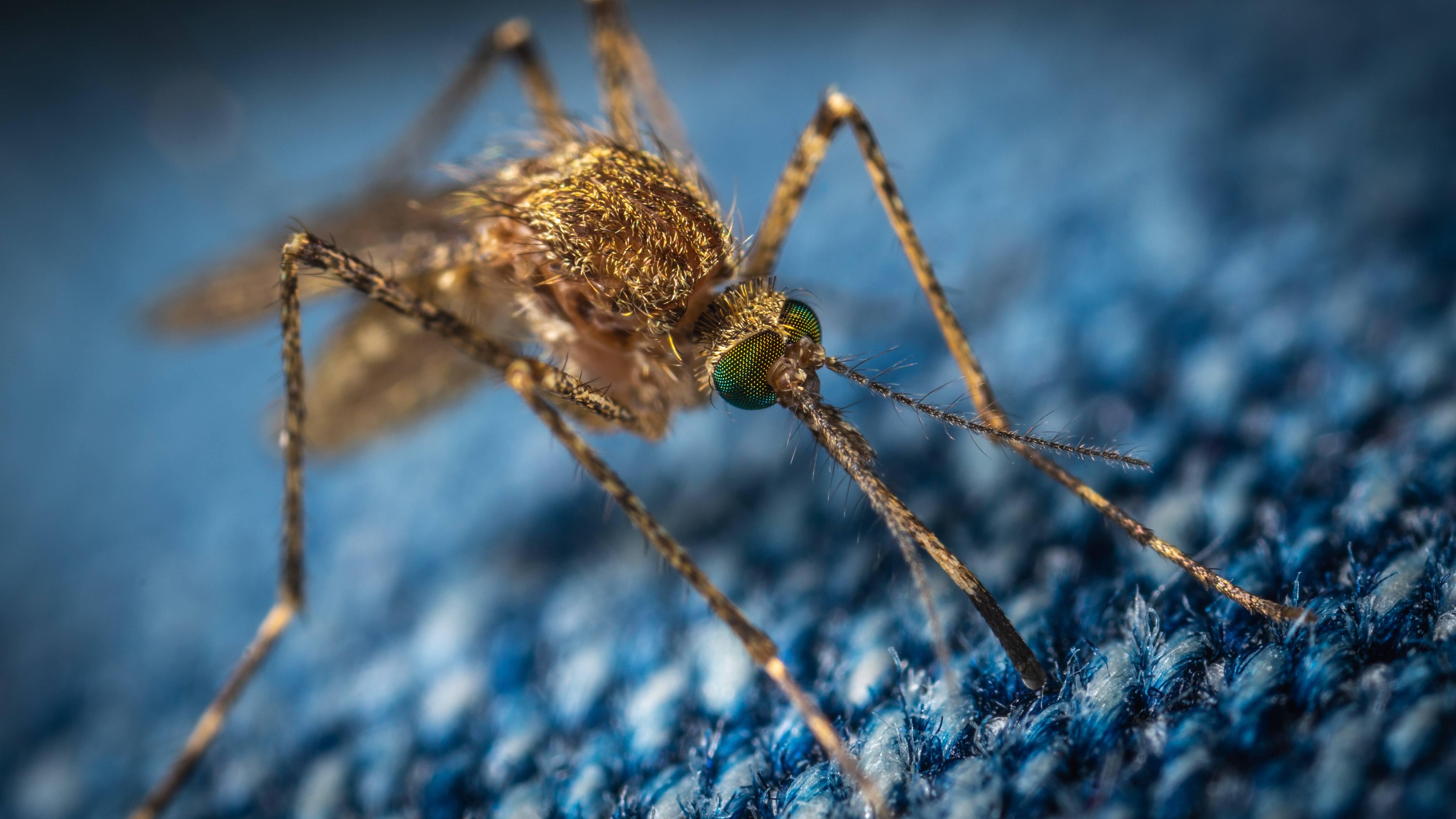 Experto explica porqué los mosquitos solo pican a ciertas personas