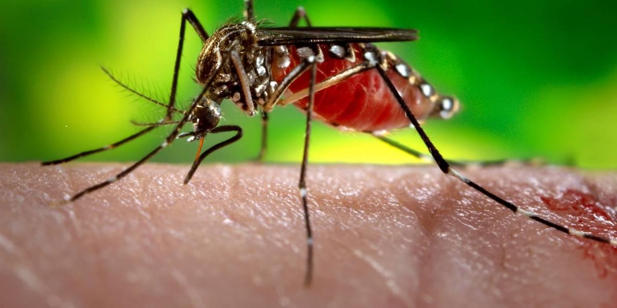 Alerta en Iquique por Zika y fiebre amarilla lleva a que el Ejército se despliegue de forma inédita