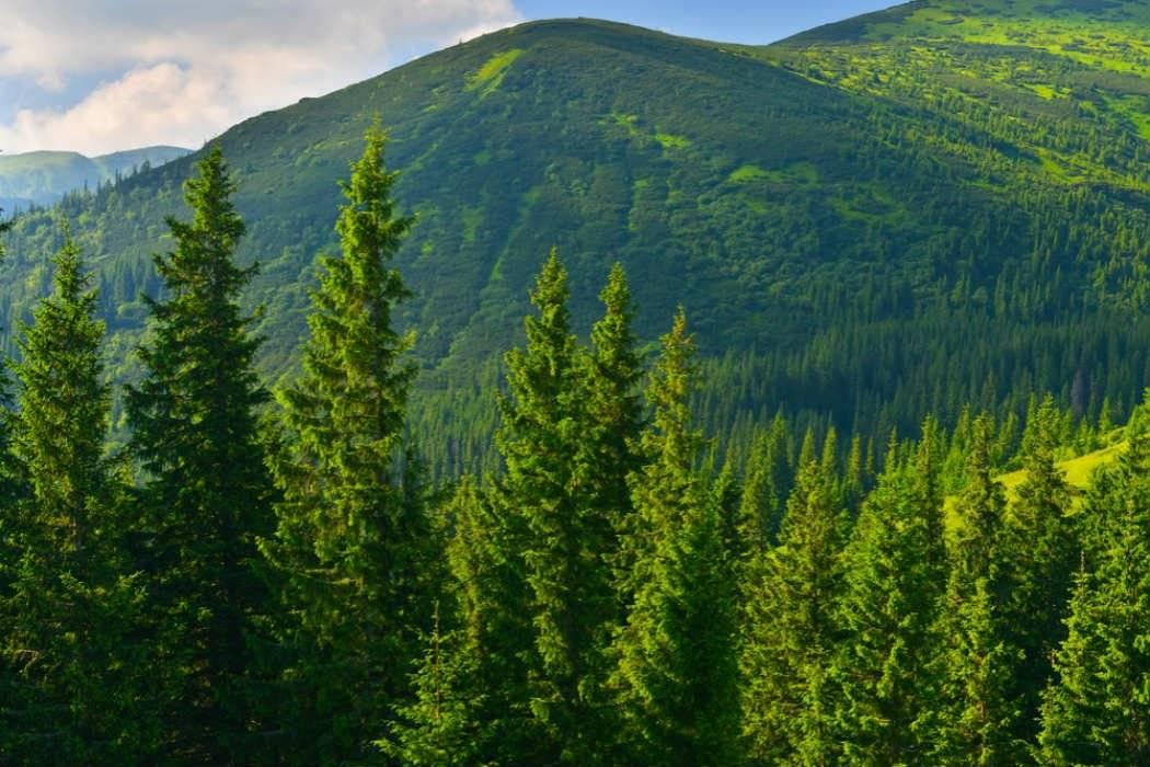 Estudio señala que salvar los bosques es la mejor herramienta para combatir el cambio climático