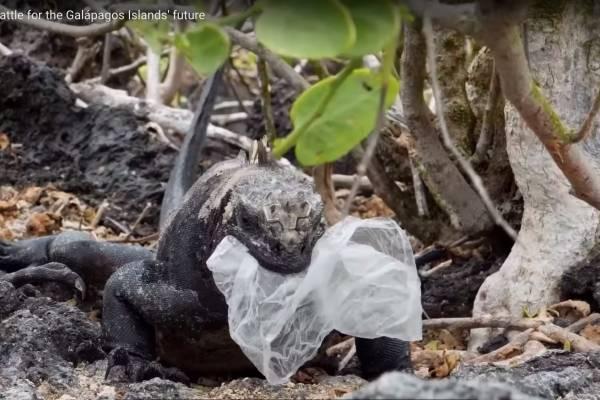 Contaminación en Galápagos: Las impactantes imágenes del plástico que azota al paraíso