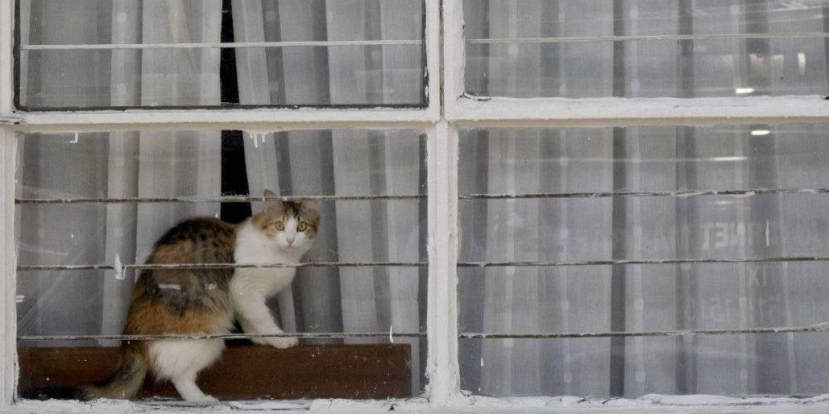 Los gatos son capaces de identificar su nombre, revela estudio