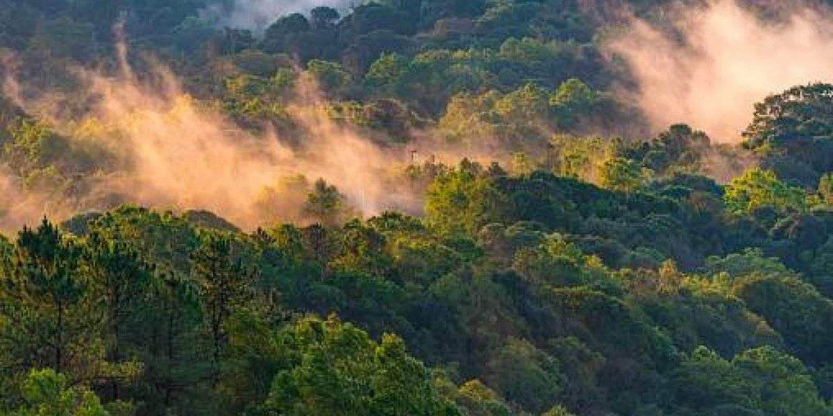 Descubren el árbol tropical más alto del mundo