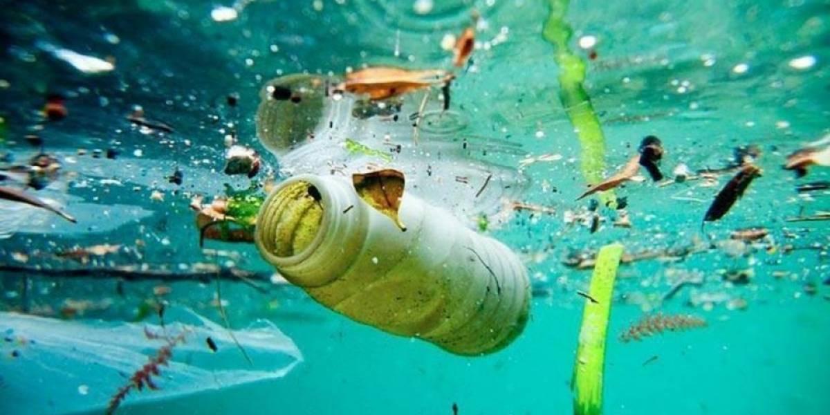Estudio internacional de Greenpeace alerta sobre el estado actual de los océanos y llama a proteger un tercio de ellos