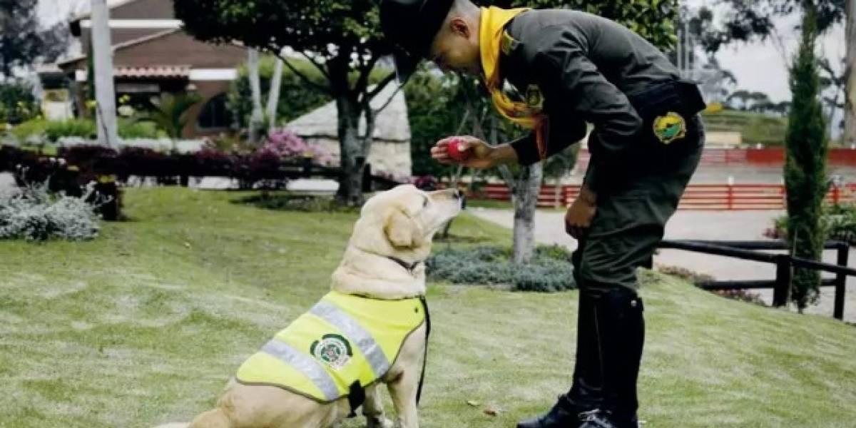 La Policía da en adopción a 10 amorosos héroes de cuatro patas
