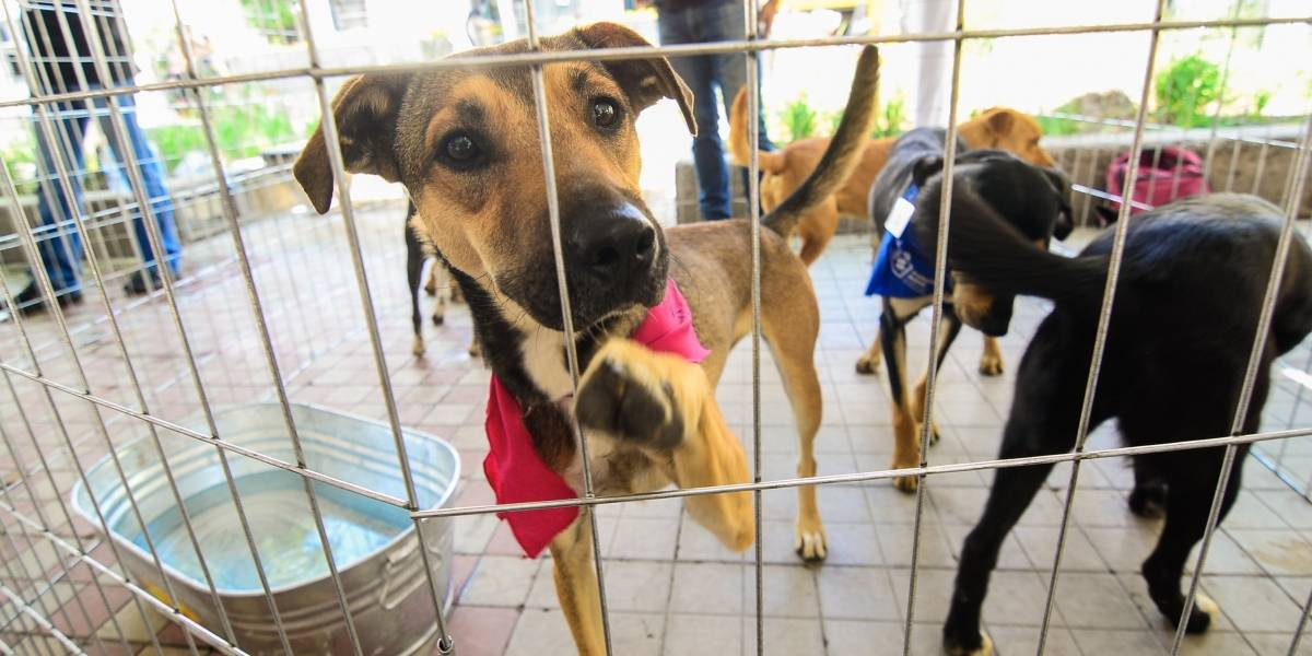 Denuncias por maltrato animal se elevan en 214%