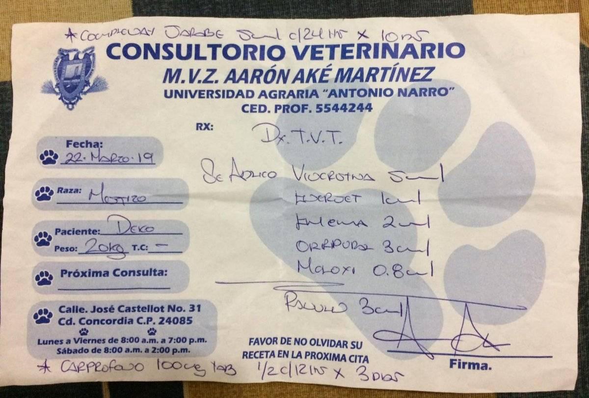 Perrito vende postres para pagar quimioterapias en Campeche