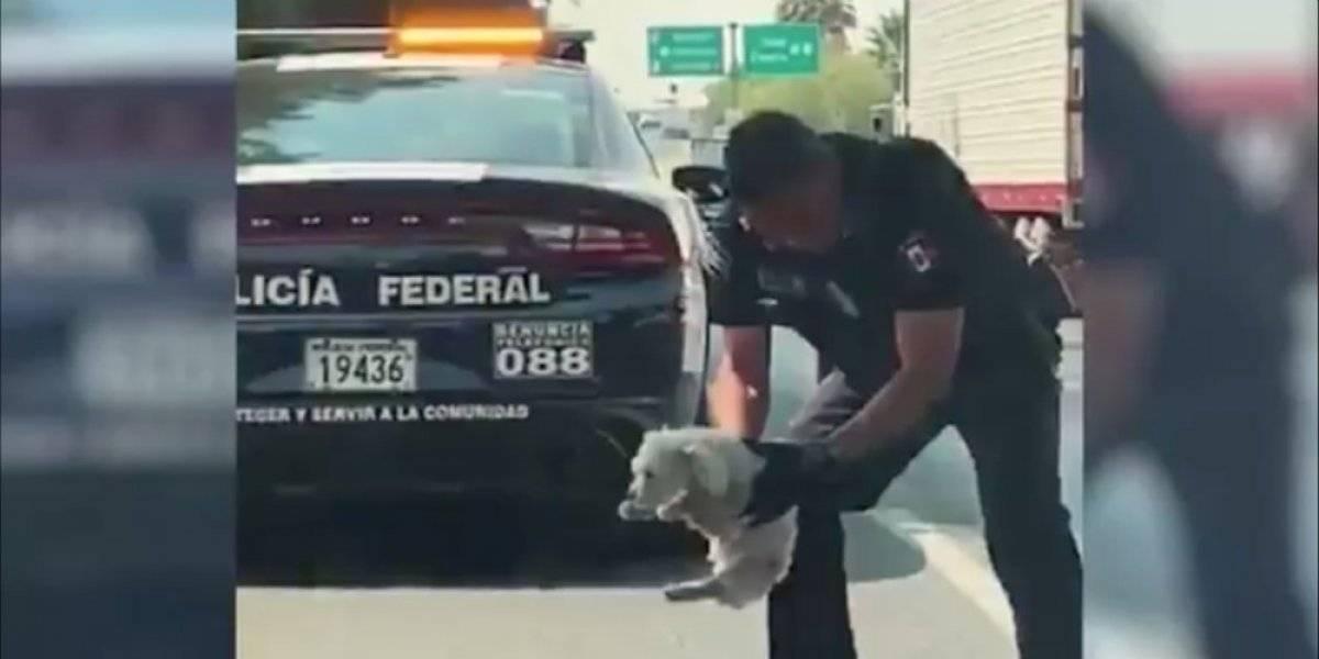 ¿Qué pasó con el perrito rescatado en la carretera por un policía federal?