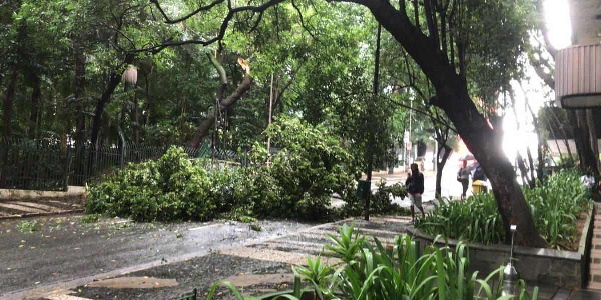 Queda de árvore deixa feridos na zona sul de São Paulo