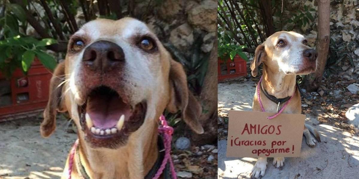 'Deko', el perrito que vende postres para pagar sus quimioterapia