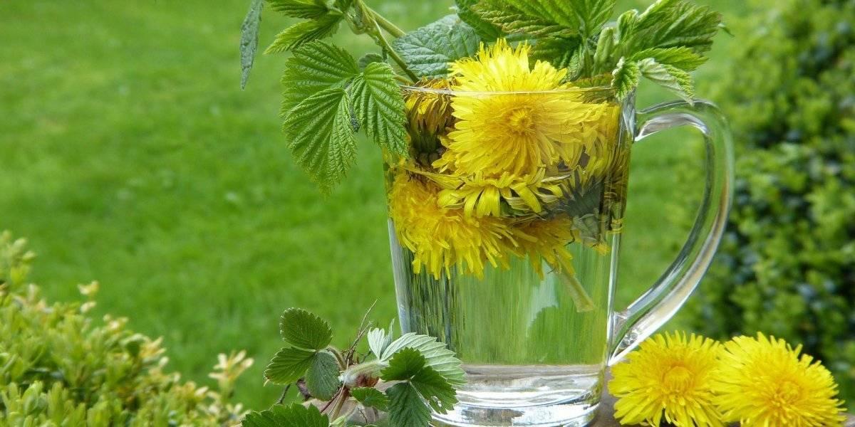 Chá de dente-de-leão ajuda a emagrecer e tem ótimas propriedades tônicas; confira a receita