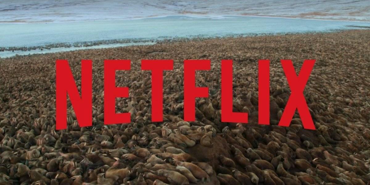 Nosso Planeta: Cena de série da Netflix está chocando os espectadores