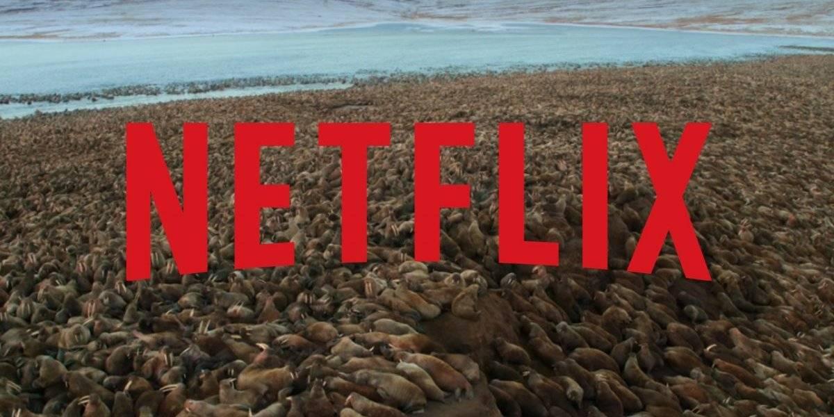 Zoologista chama novo documentário da Netflix de 'pornografia de tragédia'