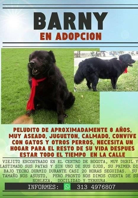15 animalitos, entre perros y gatos, buscan un hogar para toda la vida en Bogotá Facebook