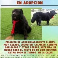 15 animalitos, entre perros y gatos, buscan un hogar para toda la vida en Bogotá