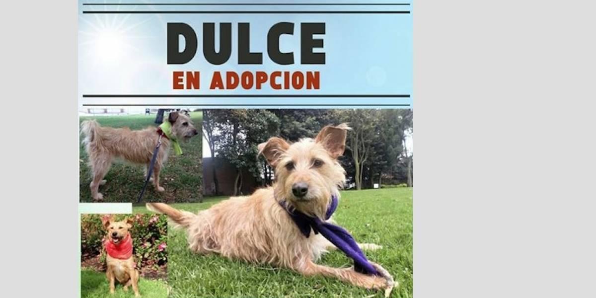 FOTOS: 15 animalitos, entre perros y gatos, buscan un hogar para toda la vida en Bogotá