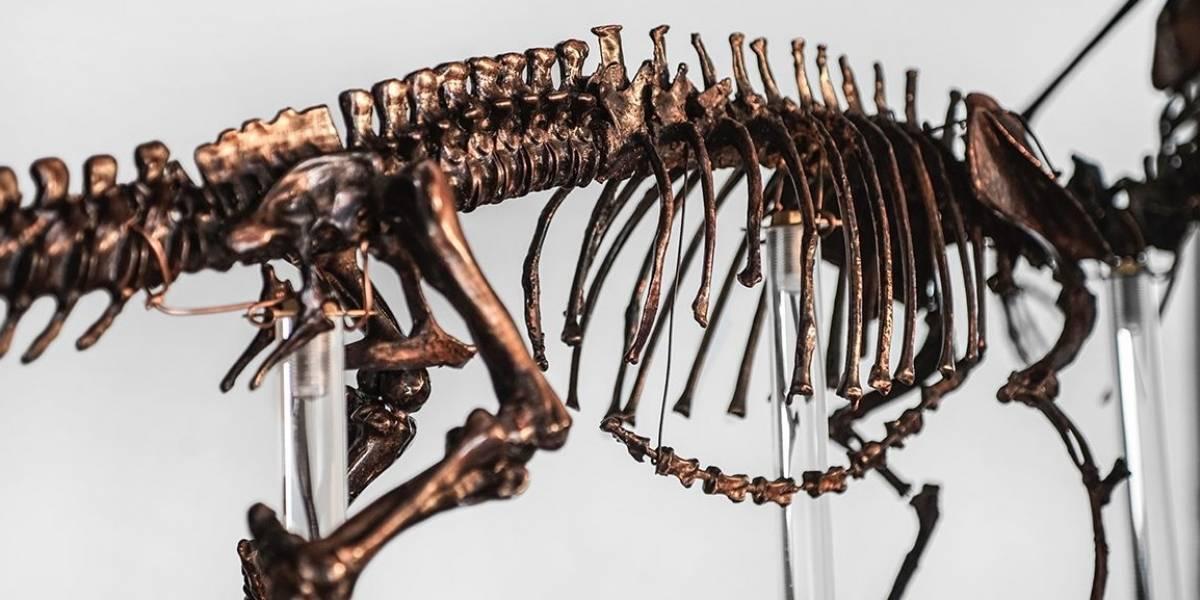 """Otra excelente noticia del mundo científico: encuentran por primera vez huellas de dinosaurio con impresiones """"perfectas"""" de su piel"""