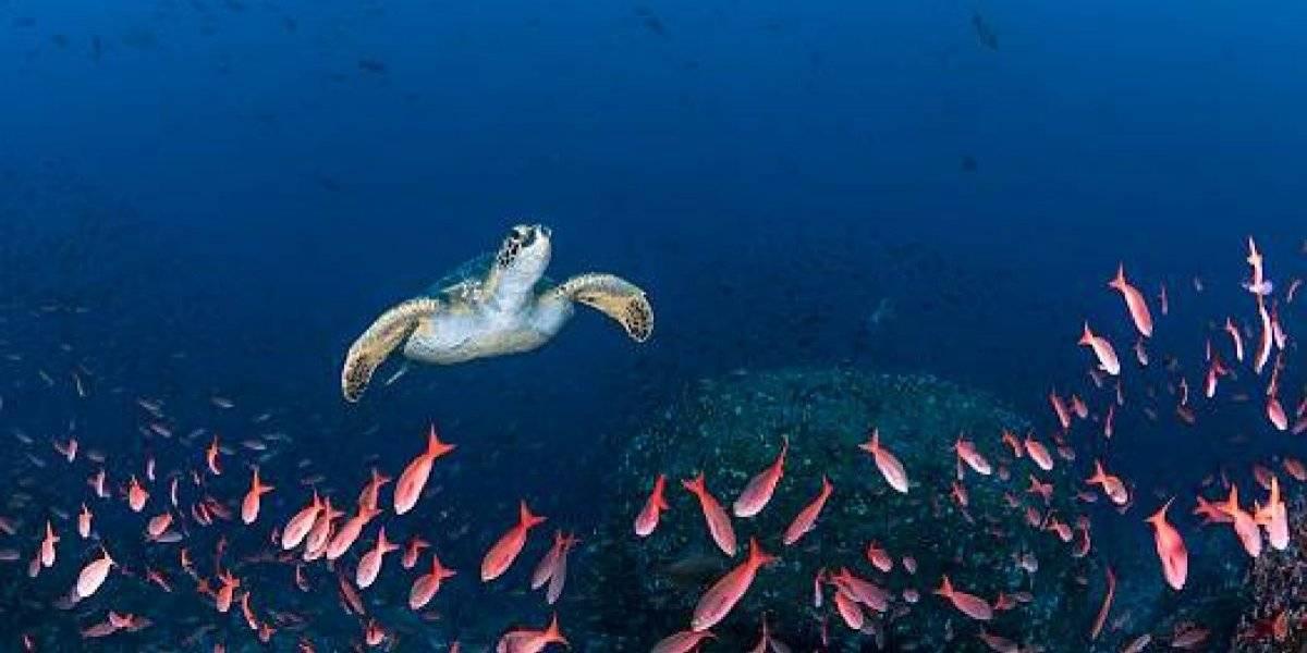 Galápagos se llena de más especies invasoras