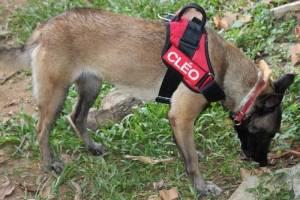 Cachorro Brumadinho
