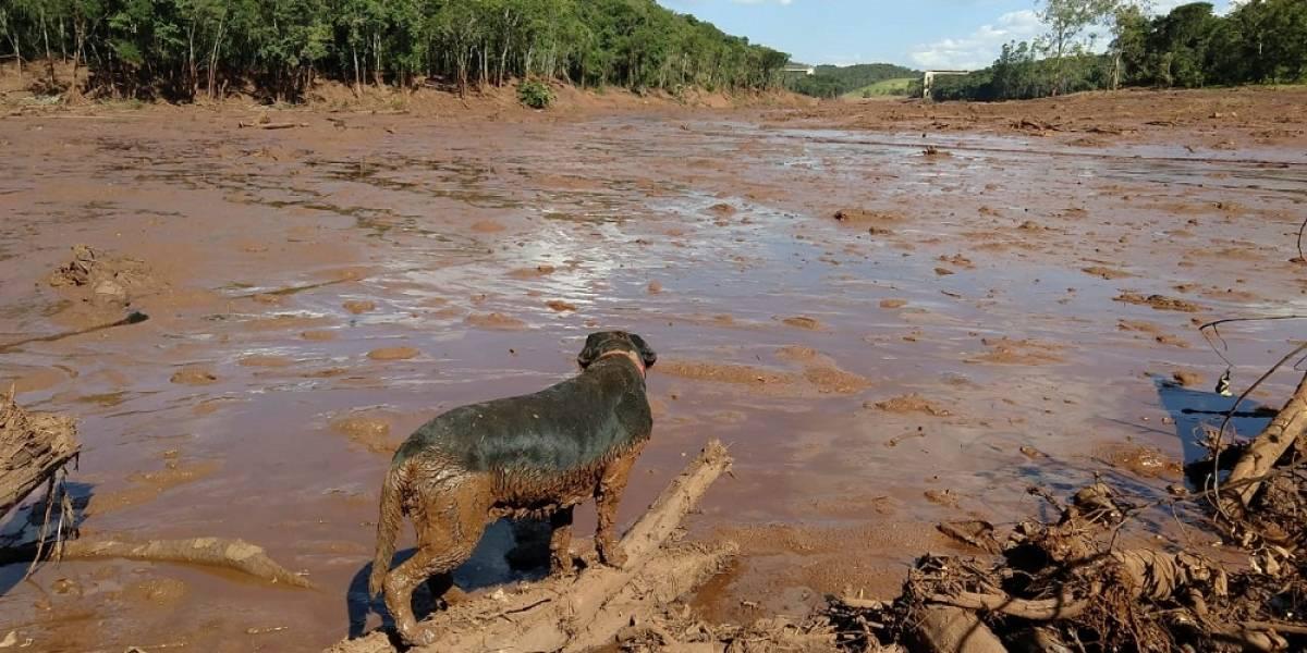 Corpo de Bombeiros manda cães 'paulistas' para ajudar nas buscas em Brumadinho