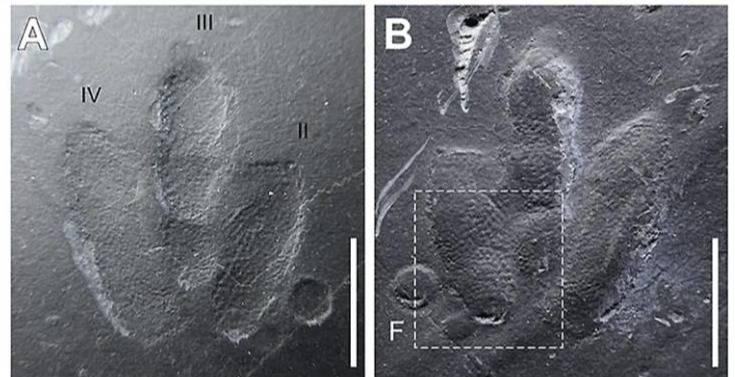 Descubren huellas de dinosaurio tan bien conservadas que se pueden detalles de su piel