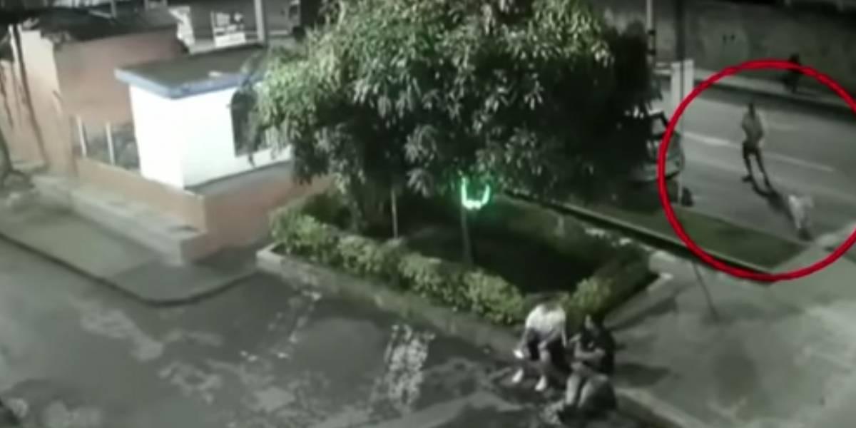 Hombre drogaba a su perro y lo entrenaba para atacar personas